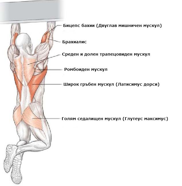 Кои мускули се натоварват при набирания с подхват