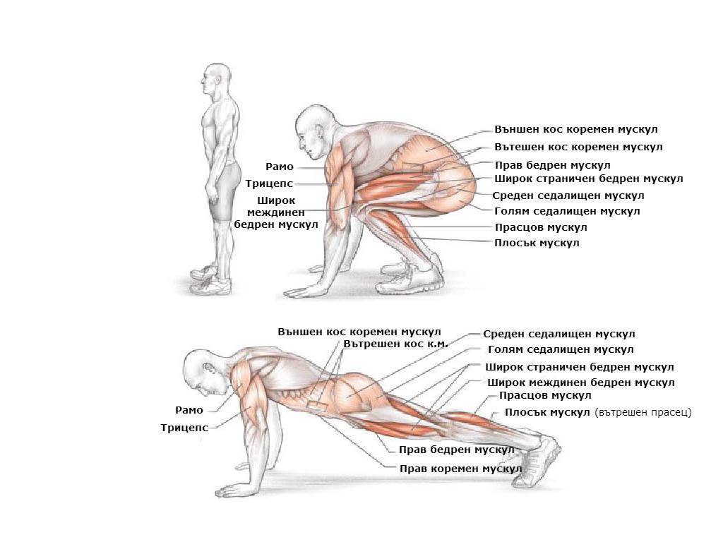 Кои мускули участват при изпълнението на бърпи