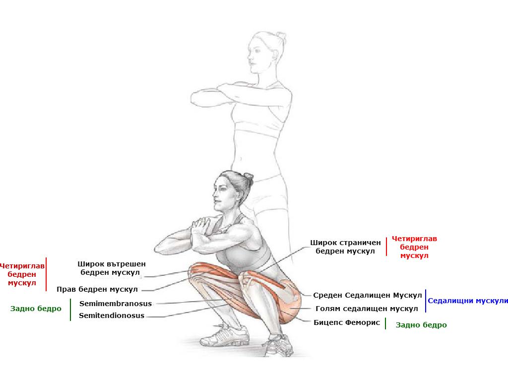 Клекове, кои мускули се натоварват