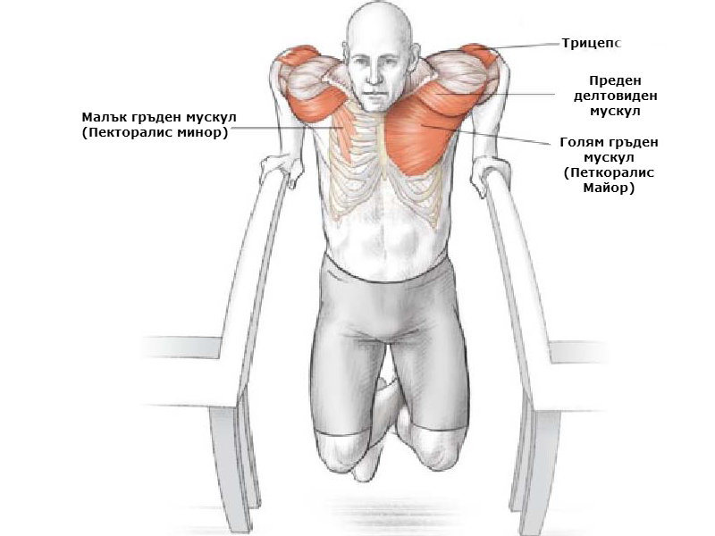 Кофички. Кои мускули участват