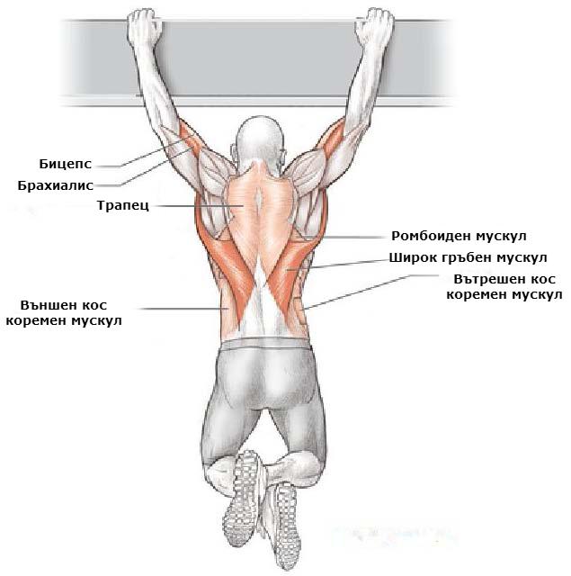 Кои мускули се натоварват при набирания с надхват