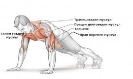 Кои мускули участват при изпълнението на различни упражнения ?