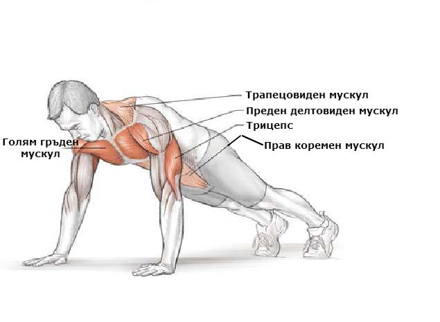 Кои мускули се натоварват при лицеви опори