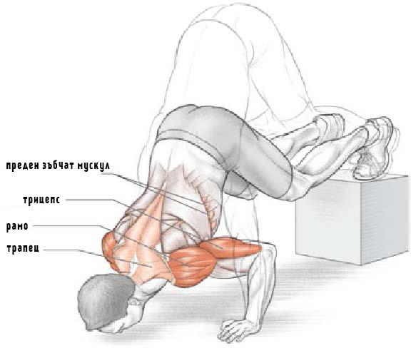 Кои мускули се натоварват при изпълнение на лицеви опори за рамо с повдигнати крака