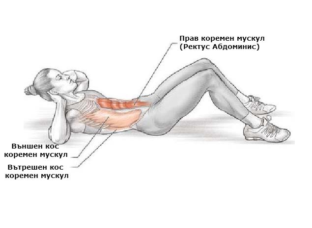 Кои мускули взимат участие и биват натоварени по време на изпълнение на коремни преси